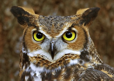 Quote: A Wise Old Owl - djedwardson.com